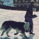 ST Bernard σε Kleine Scheidegg Στοκ φωτογραφία με δικαίωμα ελεύθερης χρήσης