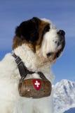 St Bernard. Alps view in the winter whit st bernard dog Royalty Free Stock Photos