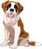 St. Bernard Dog. Sitting in front of white background Stock Photography