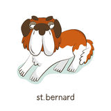 St. Bernard. Dog character  on white Royalty Free Stock Photos