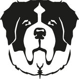 St Bernard dog head Stock Photo