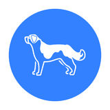 St. Bernard dog vector icon in black style for web Royalty Free Stock Images