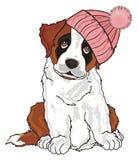 Puppy in warm hat. St. bernard girl in pink warm winter hat sit Royalty Free Stock Photos