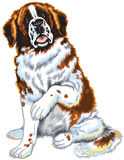 St Bernard hund Royaltyfria Bilder