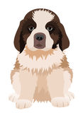 St Bernard puppy. Vector illustration. Royalty Free Stock Photo