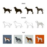 St. Bernard, retriever,doberman, labrador. Dog breeds set collection icons in black,flat,outline style vector symbol. St. Bernard, retriever.doberman, labrador Royalty Free Stock Photo