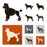 St. Bernard, retriever,doberman, labrador. Dog breeds set collection icons in black, flat style vector symbol stock. St. Bernard, retriever.doberman, labrador Stock Photo