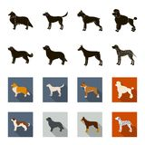 St. Bernard, retriever,doberman, labrador. Dog breeds set collection icons in black,flet style vector symbol stock. Illustration Royalty Free Stock Photo