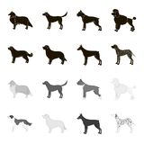 St. Bernard, retriever,doberman, labrador. Dog breeds set collection icons in black,monochrome style vector symbol stock. Illustration Royalty Free Stock Photography