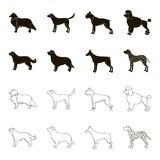St. Bernard, retriever,doberman, labrador. Dog breeds set collection icons in black,outline style vector symbol stock. Illustration Royalty Free Stock Photo