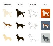St. Bernard, retriever,doberman, labrador. Dog breeds set collection icons in cartoon,black,outline,flat style vector. St. Bernard, retriever.doberman, labrador Royalty Free Stock Images