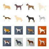 St. Bernard, retriever,doberman, labrador. Dog breeds set collection icons in cartoon,flat style vector symbol stock. Illustration Royalty Free Stock Image