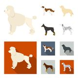 St. Bernard, retriever,doberman, labrador. Dog breeds set collection icons in cartoon,flat style vector symbol stock. St. Bernard, retriever.doberman, labrador Stock Photos