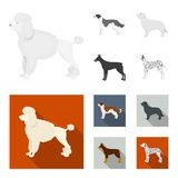 St. Bernard, retriever,doberman, labrador. Dog breeds set collection icons in monochrome,flat style vector symbol stock. St. Bernard, retriever.doberman Royalty Free Stock Photo