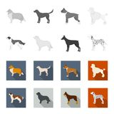 St. Bernard, retriever,doberman, labrador. Dog breeds set collection icons in monochrome,flat style vector symbol stock. Illustration Stock Photography