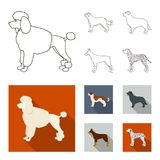St. Bernard, retriever,doberman, labrador. Dog breeds set collection icons in outline,flat style vector symbol stock. St. Bernard, retriever.doberman, labrador Stock Photo