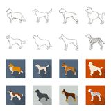 St. Bernard, retriever,doberman, labrador. Dog breeds set collection icons in outline,flat style vector symbol stock. Illustration Stock Images