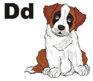 Puppy and letters d. St. bernard sit with black letters d Stock Photo