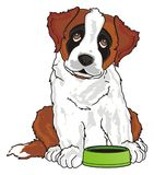 Puppy ask to feed him. St. bernard sit with an empty bowl and ask to eat Royalty Free Stock Images
