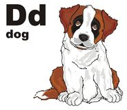 Puppy and abc. St.bernard sit with word and letters d vector illustration