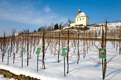 St. Clara vineyards, Troja, Prague, Czech republic Stock Photos