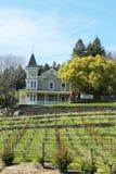 St Clement Vineyards dans Napa Valley Photographie stock libre de droits