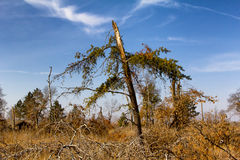 St. Croix State Park Wind Damage Royalty Free Stock Photography