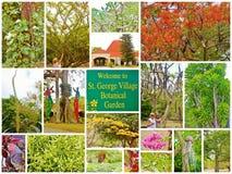 St croix usvi botanical garden collage Stock Photography