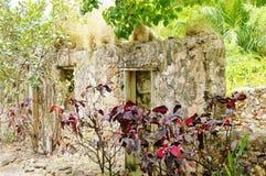 St croix usvi botanical garden croton near ruins Royalty Free Stock Images