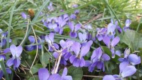 1st dag av våren Arkivfoto