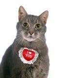 St de kat van de Dag van de Valentijnskaart Royalty-vrije Stock Afbeeldingen