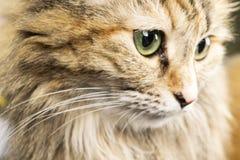 St?ende av en r?d katt En minut av tystnad arkivfoto
