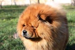 St?enden av en h?rlig hund f?r k?kk?k i parkerar royaltyfri foto