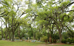 ST. FRANCISVILLE, LOUISIANA, USA - 2009: Tombs and oak trees at the cemetery located in historic Grace Episcopal Church. royalty free stock image