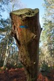 Denecourt trail blue mark in Fontainebleau forest. St Germain rock trail in Fontainebleau forest Stock Photos