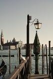 St Giorgio i seagull w Wenecja, Włochy fotografia royalty free