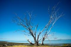 St Helena Island National Park, Queensland, Australie Image stock