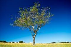 St Helena Island National Park, Queensland, Australie Images libres de droits