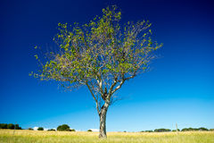 St Helena wyspy park narodowy, Queensland, Australia obrazy royalty free