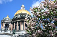 St. Isaac`s Cathedral in lilac royalty free stock image