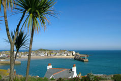 St. Ives harbour palm trees. Royalty Free Stock Photo