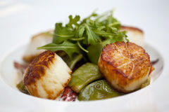 St. Jacques scallops Stock Photos