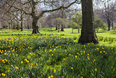 St. James's Park in London During Spring Royalty Free Stock Photo