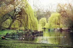 St. james's park scene, London Stock Photos