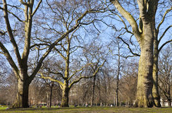 St Jamess Park in London Stock Photography