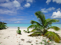 St john`s, Antigua - Caribbean beach with palm tree. Tropical and exotic Caribbean paradise with beautiful turquoise blue water, white sandy beach and palm tree Stock Photos