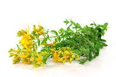 St. John's wort Stock Photos