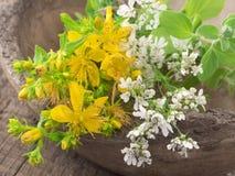 St john's wort with coriander flowers Royalty Free Stock Photo