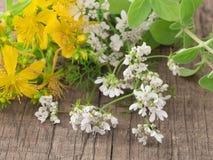 St john's wort with coriander flowers Royalty Free Stock Photos