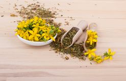 St. John`s wort. Dried and fresh, flowering St. John`s wort with bowl and spoons on a wooden background Stock Photography